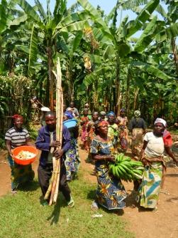 récoltes au Kivu