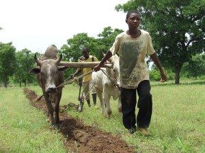 village Boborola (53)