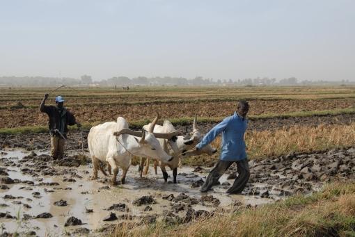 riziculture L.Lewalle