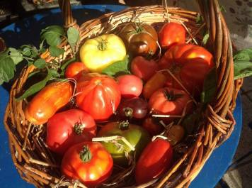 tomates luxembourgeoises